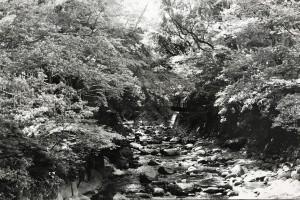 [特選]中3 関「岩河」